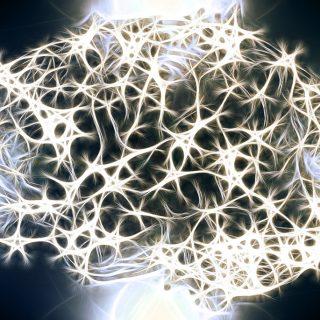quanti neuroni abbiamo